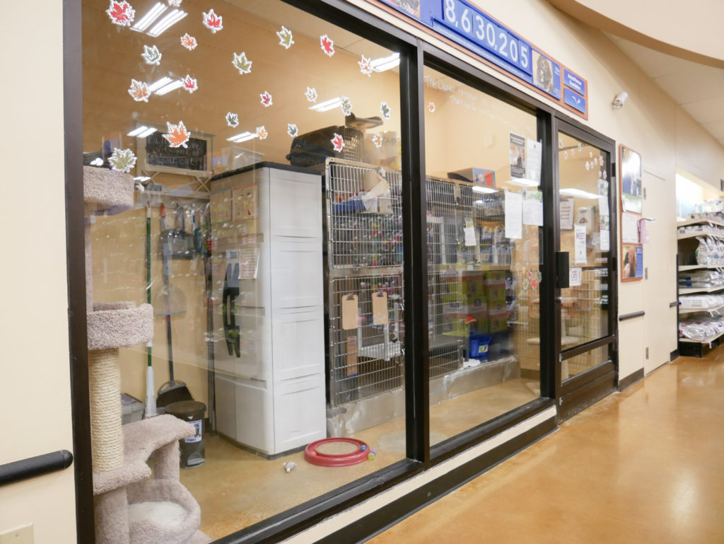 Darien PetSmart Cat Adoption Center